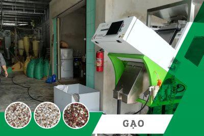 Máy tách màu gạo nếp Tây Bắc – Dự án lắp đặt máy thực tế