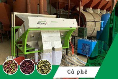 Máy tách màu cà phê quả tươi (cherry coffee)| Arabica.