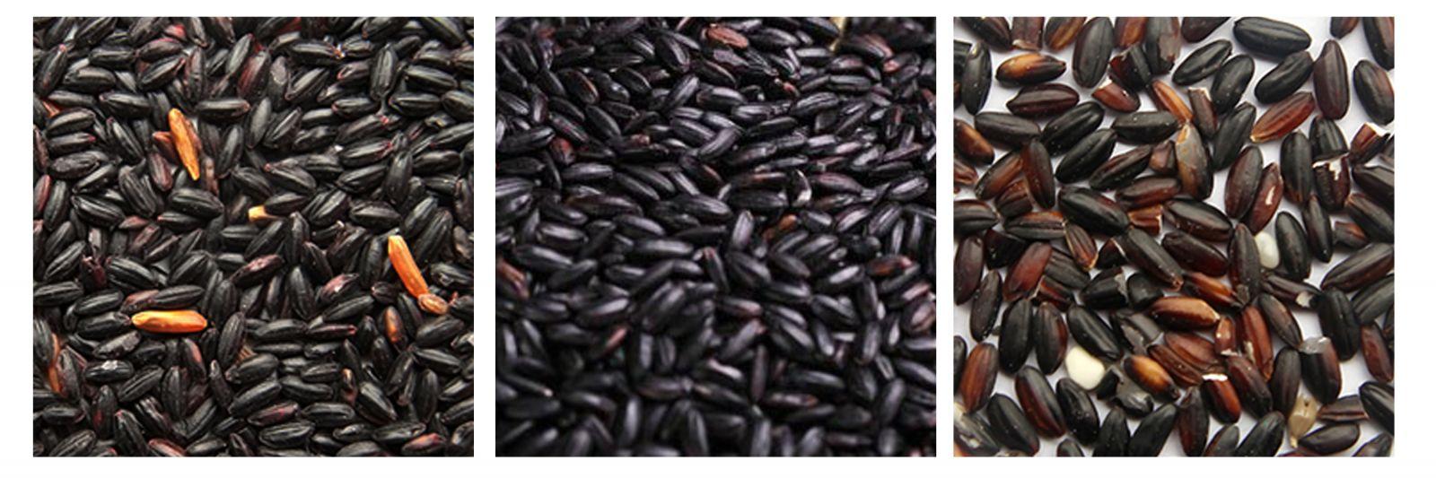 phân loại màu gạo nếp cẩm