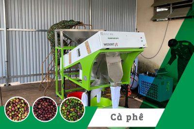 Máy bắn màu cà phê quả tươi| Dự án công ty cà phê 15