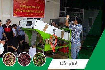 Máy tách màu cà phê quả tại HTX NN DV Công bằng Eatu.