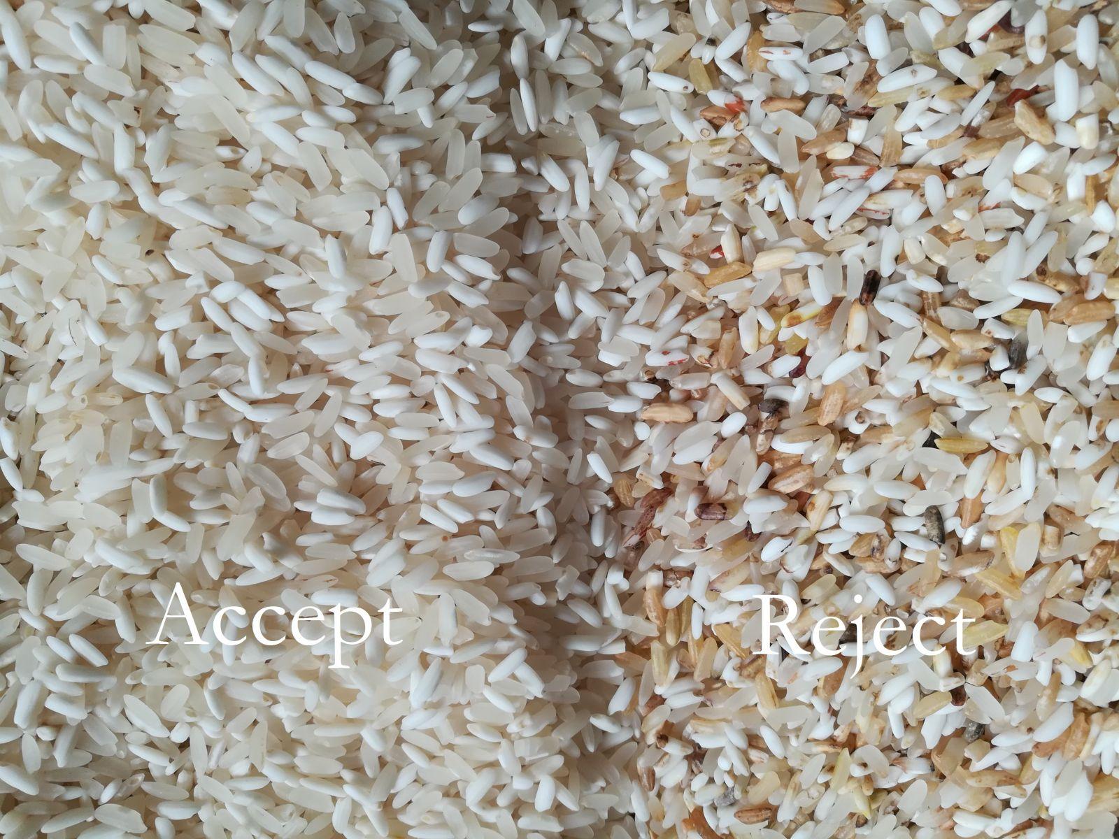 Gạo sau khi qua máy tách màu