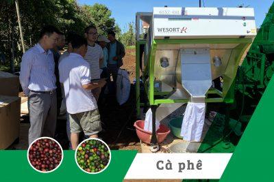 Máy bắn màu cà phê quả tươi dạng băng chuyển tại THT Hoa Linh