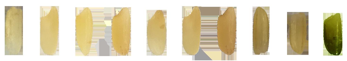 Dãy màu tách gạo hạt vàng mờ